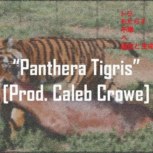 Panthera-Tigris